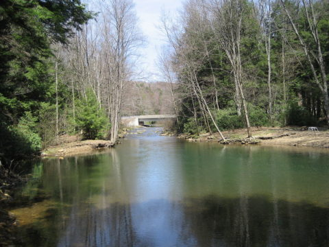Brown_Springs,_Moshannon_State_Forest